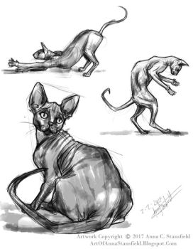 Sphynx Studies by AnnaCStansfield