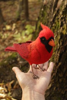 Red cardinal (Northern cardinal) 1 by Sillykoshka