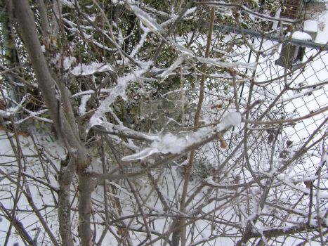 Icey Tree by ceil210