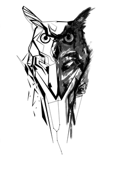 Owl by kybel