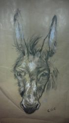 Charcoal donkey by Cristy-spain