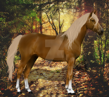 Palomino Forest by hollymia