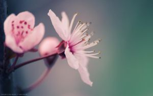 Spring flowers background I by quansie