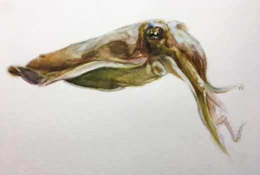 Cuttlefish by hrutger