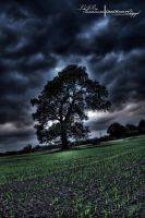 HDR Oak Tree. by ElementaryDearWatson
