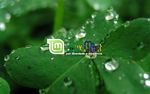 To Linux Mint Brazil [f by malvescardoso