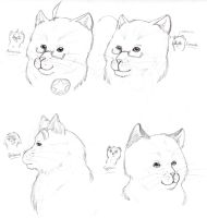 Realistic Hetalia cats 2 by nightwindwolf95