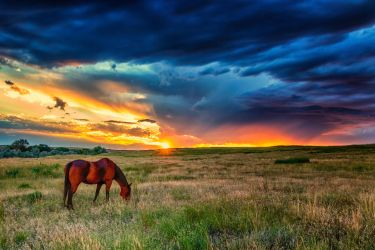 Clearing Storm and Horse by DeTea