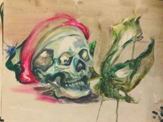 Skull study by Fischmeister