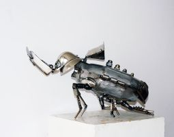 Rhinoceros beetle by Muti-Valchev