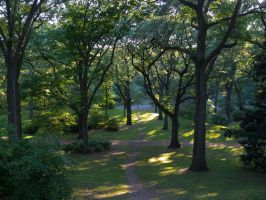 Arnold Arboretum 3 by the3dman