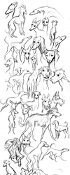 Dog Show Croquis by CanisAlbus