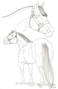 OLD - Stock Horse Halter Line Art (Free To Use!) by DreamHorseStudios