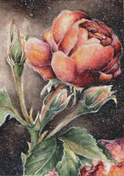 Rosa Asagumo (ATC for a swap) by getalittlelostwithme