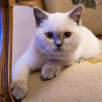 Lila is growing up by pers-photo