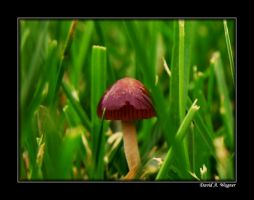 Captured by a mushroom by David-A-Wagner