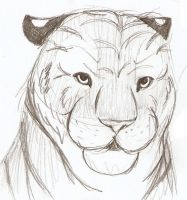Tiger Sketch 3 by Joava