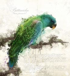 Psittacidae by Owhl