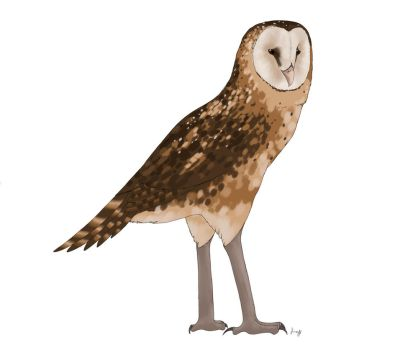 Tyto pollens by ProjectOWL