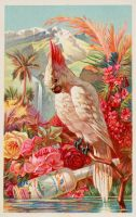 Victorian Advertising - Tropical Beauty by Yesterdays-Paper