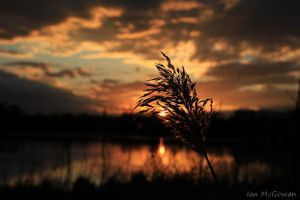 Reed Magic . by 999999999a