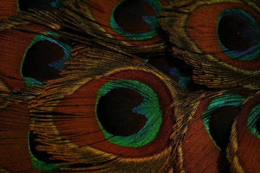 Peacock Feathers by WhataSmartyCat
