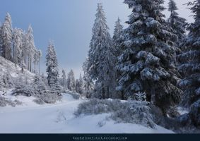 White Forest 09 by kuschelirmel-stock