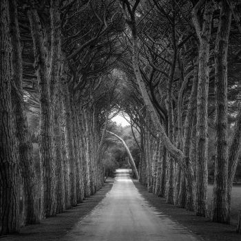 Tunnel by F1L1P