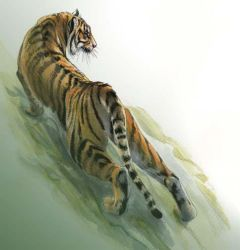 Sumatran tiger by Emushi