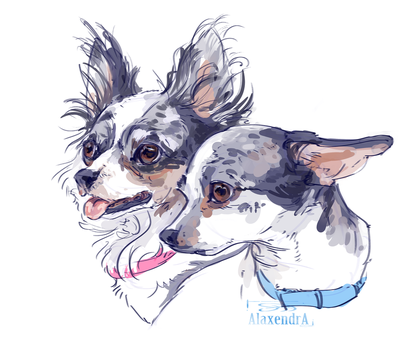 Chihuahua (dog) by AlaxendrA