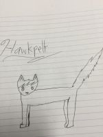 Hawkpelt by ace-of-spades3220