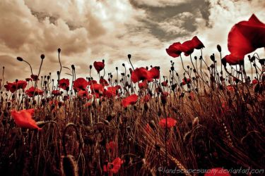 poppyworld by naturetimescape