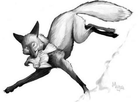 Fox by caramitten