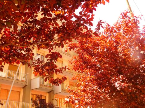 Red Leaves in the Urban Street - 2 by Degonia