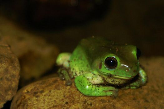 Small Frog by sheriffek