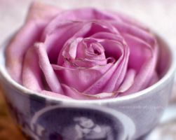 Cup of rose by FrancescaDelfino