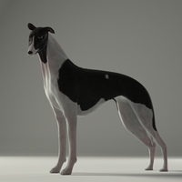 Whippet Model and Rig by TheDuckCow