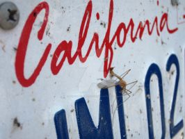 Cali Mosquito by beadsofcompassion