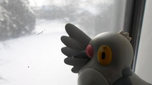 Pidove thinks it is snowing... by MidnightRarity