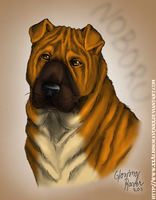 Chinese Shar Pei by casualGEE