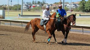 Racehorse Stock 53 by Rejects-Stock