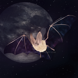 Nebula Night Bat by AdamAether