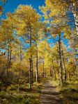 Trees aglow by kayaksailor