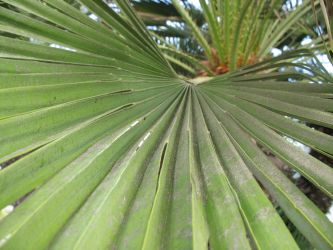 Palm Frond by Imager1966