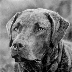 Drawing - dog lady Alba by Ennete