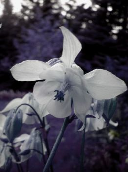 Wilted by daffodil20