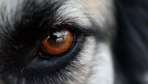 Eye of the Canine by Illustrate-The-World