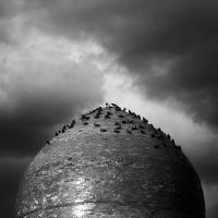 Dome and poultry by LILY-m