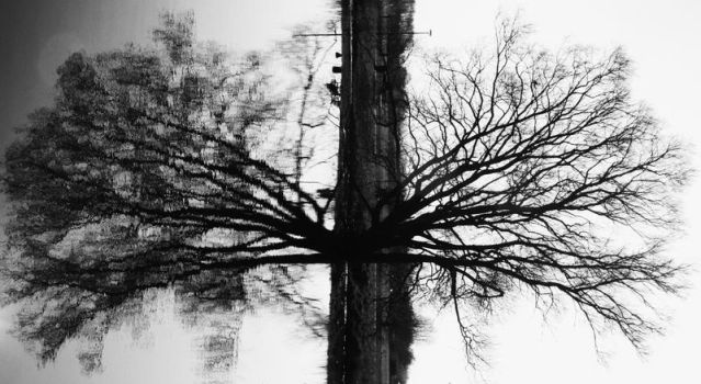 Earth's Lungs by Telestic