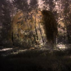 young forest impression by old-timer-dev